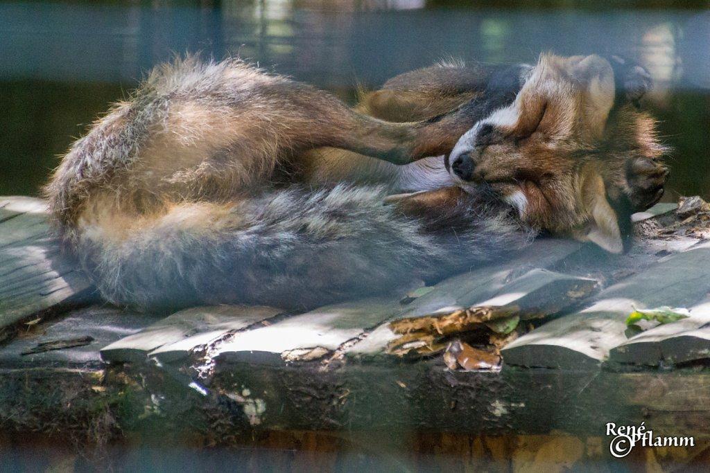 #Fuchs